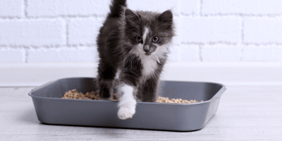 Black and white kitten in litter box