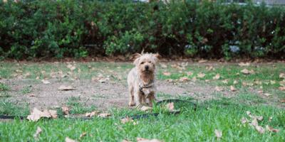 Brown little dog in the garden