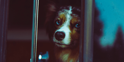 Brown and black dog through a window