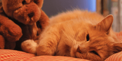 Cancer in cats: all is revealed