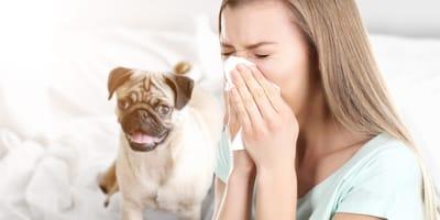 Jestes alergikiem? Poznaj 6 ras psów dla alergików