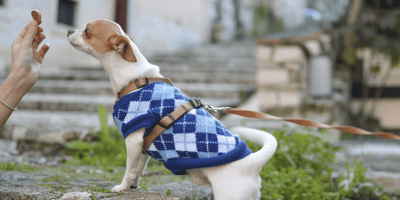 Everything you need to know about low protein dog food