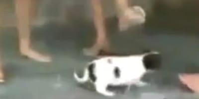 Nackte Füße und ein Hund