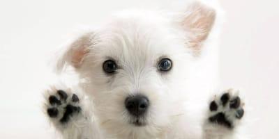 Perro callejero precioso
