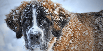 Everything you need to know about your dog's temperature