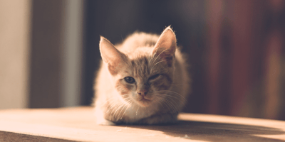 Everything you need to know about cat herpes