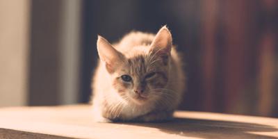 Ginger kitten winking