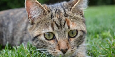 How to prevent fleas on cats?