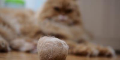 How to treat cat hairball