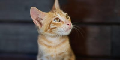 What is the best ringworm treatment for cats? Read this pet parent guide!