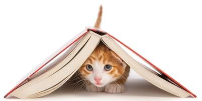 Imiona dla kota i kotki – poznaj nasze pomysły!