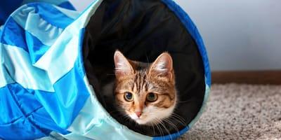 Top 5 cat training tips