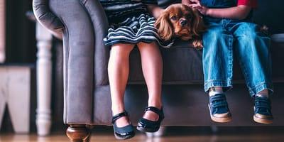 Czy pies może odczuwać zazdrość wobec innych psów lub dzieci?