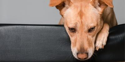 Perché il cane vomita? Ecco quando intervenire