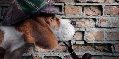 perro detective
