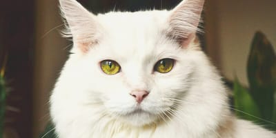 Everything you need to know about a spayed cat