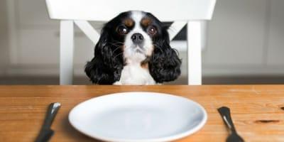 Domowe jedzenie dla psa - poznaj podstawowe zasady