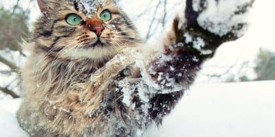 gato con frio en la nieve