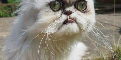 el gato mas feo