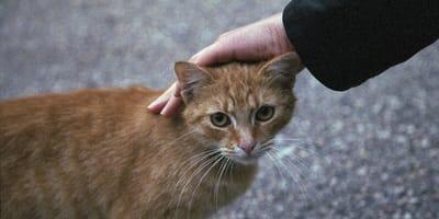 Hand streichelt Katze auf Straße