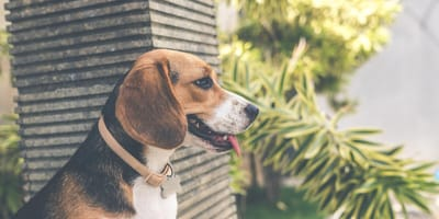5 small to medium dog breeds