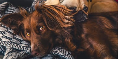 Everything there is to know about dog skin cancer