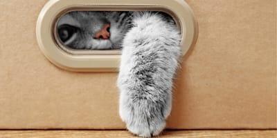 Pierwszy dzień kota w domu - jak pomóc mu w aklimatyzacji?