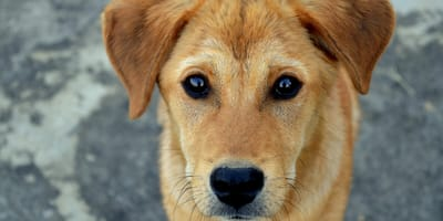 Everything you need to know about hypothyroidism in dogs