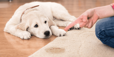Urinary incontinence in dogs: Causes and treatments