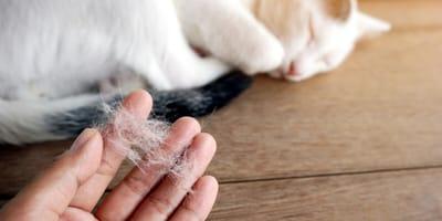Weiße Katzenhaare in der Hand