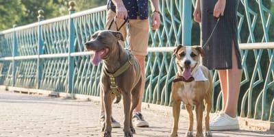 Zwei Hunde an der Leine