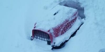Katzentrasportbox im Schnee