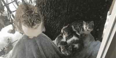 Mamma gatta con i suoi cuccioli nella neve