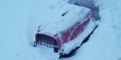 gatto abbandonato in un trasportino nella neve