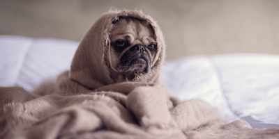 Your dog is being sick? Learn how to take care of your ill pet!