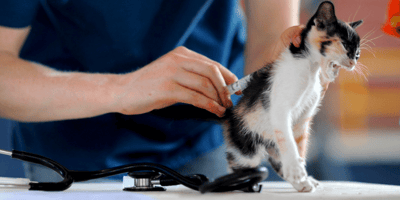 Kitten getting injection at the vet