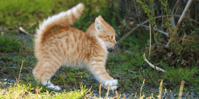 Ginger kitten looking scared