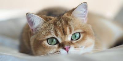 Czym jest trzecia powieka u kota?
