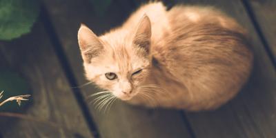 Everything you need to know about feline leukaemia virus