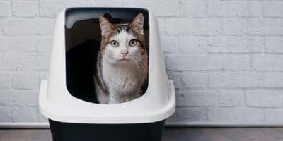 Niewydolność nerek u kota: jakie są objawy i sposoby leczenia?