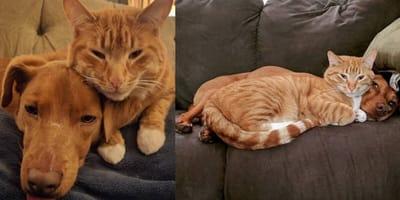 Ginger cat and dog hugging