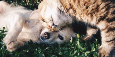 Dog and cat hugging