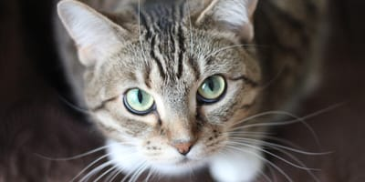 Which is the top 10 of the best cat breeds? Read the list right here!