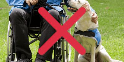 Discrimination  against assistance dogs