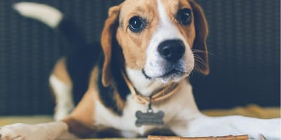 Dog DNA kits reveal genetically linked illnesses