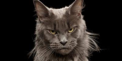 Twój kot jest obrażony? Sprawdź czym mogłeś mu podpaść!