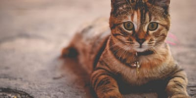 Why is my cat vomiting? And what can I do about it?