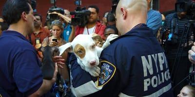 ASPCA y NYPD están de aniversario