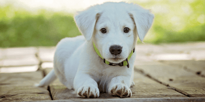 What are the first signs of heartworms in dogs?