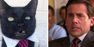 Cat named after US Office favourite is stirring up social media
